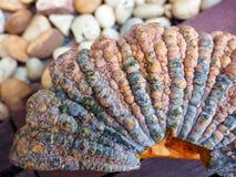 Грубая кожа тыквы с нерезкостью движения белого камня Стоковое Изображение RF