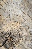 грубая древесина текстуры Стоковое фото RF
