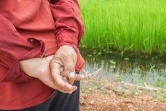 Грубая рука старого человека фермера стоковое фото
