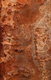 Грубая текстурированная поверхность Стоковые Фотографии RF
