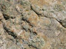 Грубая текстурированная, треснутая предпосылка стороны утеса пустыни с лишайниками Стоковое Фото