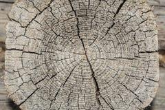 Грубой кольца текстурированные древесиной деревянные Кусок отрезка серого цвета дерева, показывающ время и леты Стоковое Изображение RF