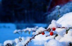 Грубые ягоды стоковая фотография rf