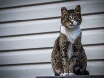 Грубый кот улицы при зеленые глаза смотря в камере Стоковые Фотографии RF