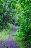 Грубый путь в древесинах Стоковая Фотография RF