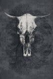 Грубый текстурированный цвет предпосылки серый с черепом быка в центре Стоковая Фотография