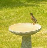 Грудь Робина красная сидя и поя на крае ванны птицы Стоковые Изображения