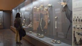 Грузинский интерьер Национального музея в Тбилиси, Georgia 11 10 2017 акции видеоматериалы