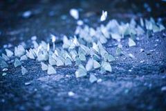 Группа бабочки на том основании Стоковое Изображение