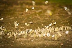 Группа бабочки на том основании Стоковая Фотография