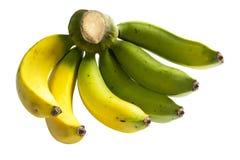 Группа банана Стоковая Фотография