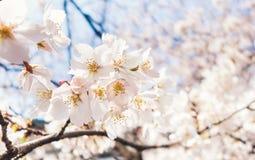 Группа вишневого цвета Стоковое фото RF