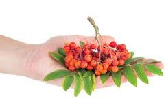 Группа владением руки ashberry Стоковые Фото