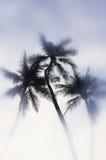 Группа в составе ладони на большом острове, Гаваи, США Стоковые Изображения