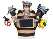 Группа в составе баварские собаки пива стоковые изображения rf