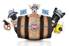 Группа в составе баварские собаки пива стоковые изображения