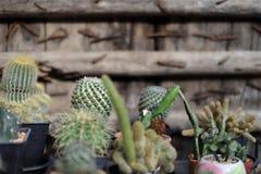 Группа в составе баки кактуса Стоковые Изображения