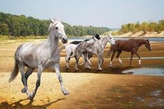 Группа в составе бега лошадей к реке стоковые изображения rf