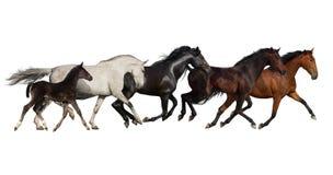 Группа в составе бег лошади Стоковая Фотография