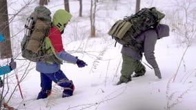 Группа в составе весьма hikers крадется через снежный лес в зимнем дне, нося оборудование в рюкзаках акции видеоматериалы