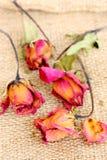 Группа в составе высушенные вянуть розы и лепестки на дерюге кладут в мешки Стоковая Фотография