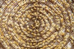 Группа в составе гнезди коконов silk глиста Стоковое фото RF