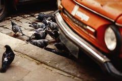 Группа в составе голуби есть на дороге около красного старого автомобиля в европейце Стоковые Изображения RF