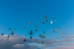 Группа в составе голуби летая на пасмурное голубое небо стоковые изображения