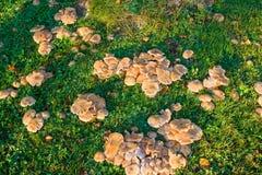 Группа в составе грибы Стоковое Изображение