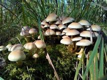 Группа в составе грибы стоковое изображение rf
