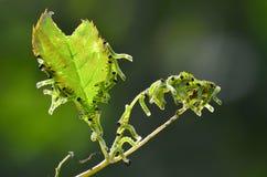 Группа в составе гусеницы Стоковые Изображения RF