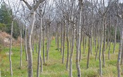 Группа в составе деревья без листьев Стоковое Фото