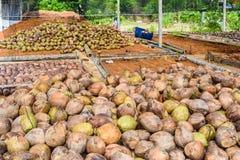 Группа в составе дух кокоса приставной резак аранжирует, сортирует аккуратный p стоковая фотография