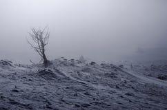 группа в составе деревья спрятанные в тумане в горах только одно показанное дерево Стоковое фото RF