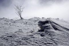группа в составе деревья спрятанные в тумане в горах только одно показанное дерево Стоковое Изображение RF
