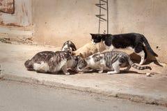 Группа в составе еда котов Стоковая Фотография