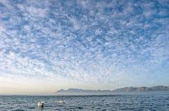 Группа в составе дельфины, плавая в океане и охотясь для рыб Стоковое Фото