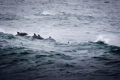 Группа в составе дельфины Стоковые Изображения