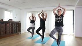 Группа в составе женщины работая последовательность йоги представления дерева на спортзале видеоматериал