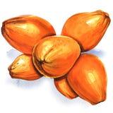 Группа в составе желтые изолированные кокосы, иллюстрация акварели на белизне иллюстрация штока