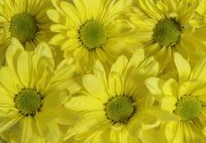 Группа в составе желтые цветки Стоковое фото RF