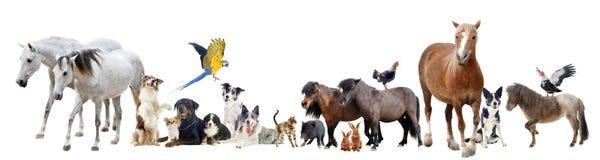 Группа в составе животные стоковое фото
