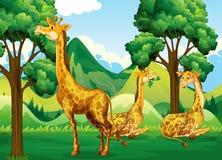 Группа в составе жираф в лесе Стоковые Изображения