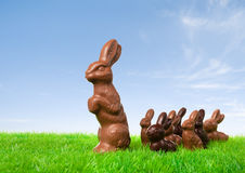 Ведение зайчика шоколада Стоковое фото RF
