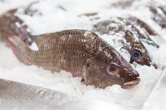группа в составе замораживание тилапии Нила на льде на свежем рыбном базаре стоковые фото