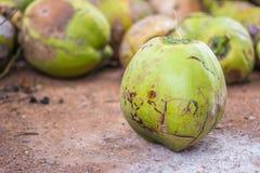 Группа в составе зеленые кокосы Стоковая Фотография