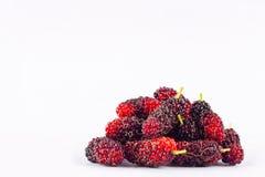 Группа в составе зрелые шелковицы на изолированной еде плодоовощ шелковицы белой предпосылки здоровой Стоковое Изображение RF