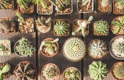 Группа в составе кактус и succulents в баке на деревянной предпосылке Стоковое Фото