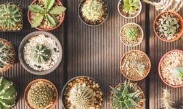 Группа в составе кактус и succulents в баке на деревянной предпосылке Стоковые Изображения