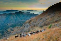 Группа в составе козы в горах Стоковое Изображение RF